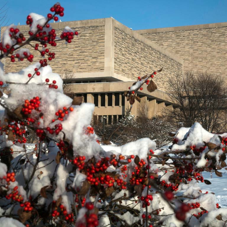 The Wells Library as seen from behind a bush with red berries, covered in snow.